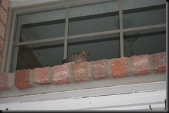 UCAbird 079